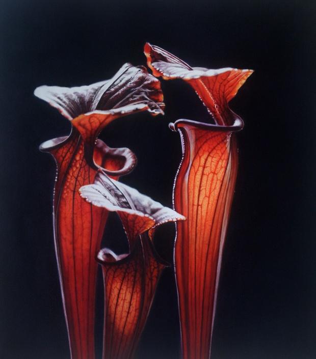 senza-titolo-sarracenia-tuberina-2012-chiara-albertoni-olio-su-tela