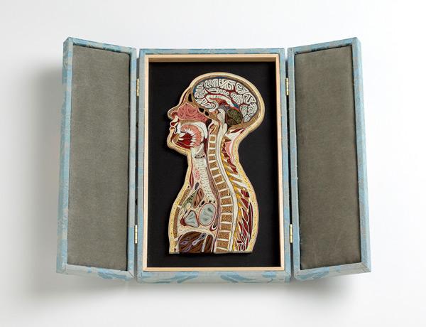 anatomy-21