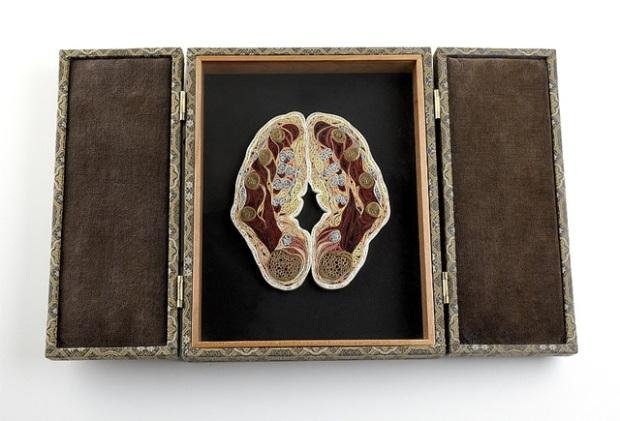 anatomy-8