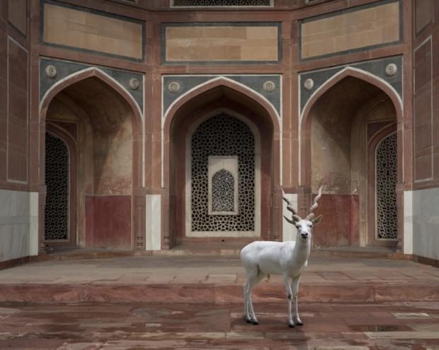 The-Witness-Humayuns-Tomb-Delhi