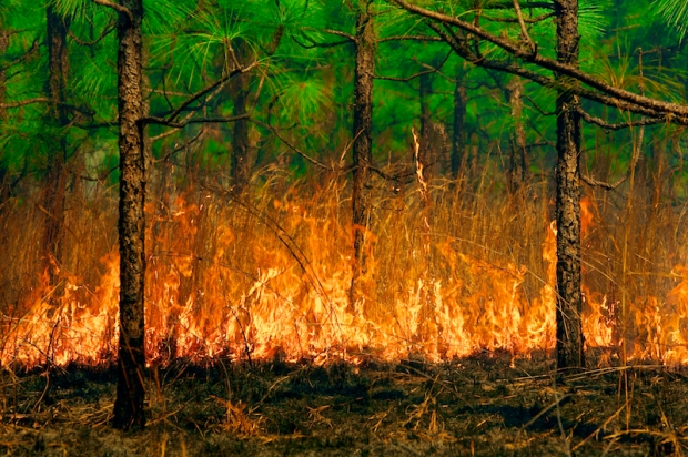 Burn 49518