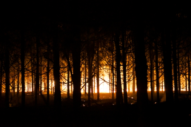 Burn 65883