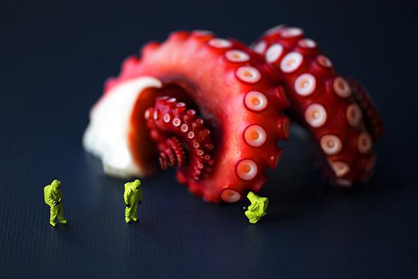 Christopher-Boffoli-Octopus-Survey-Team-594px