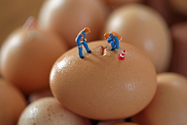 egg crack crew 24x36