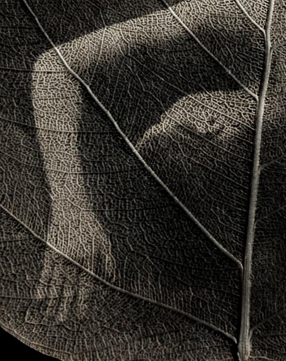 TedPreuss_Tranquil_Closeup